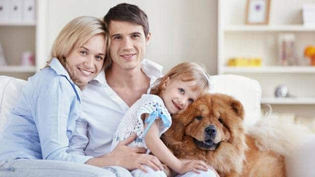 Wills & Trusts dog-young-family Direct Wills Camborne